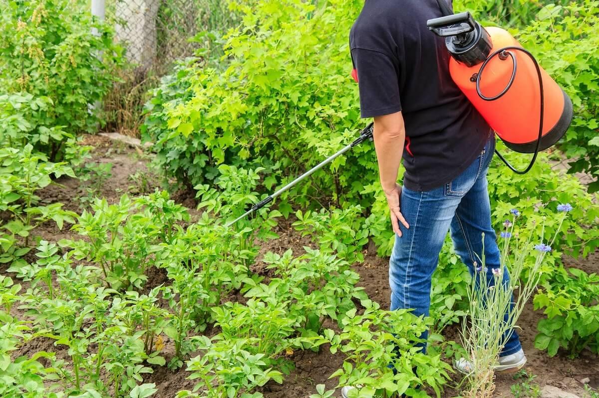 Solutii practice pentru insectele din gospodaria ta: Biocide vs Repelenti