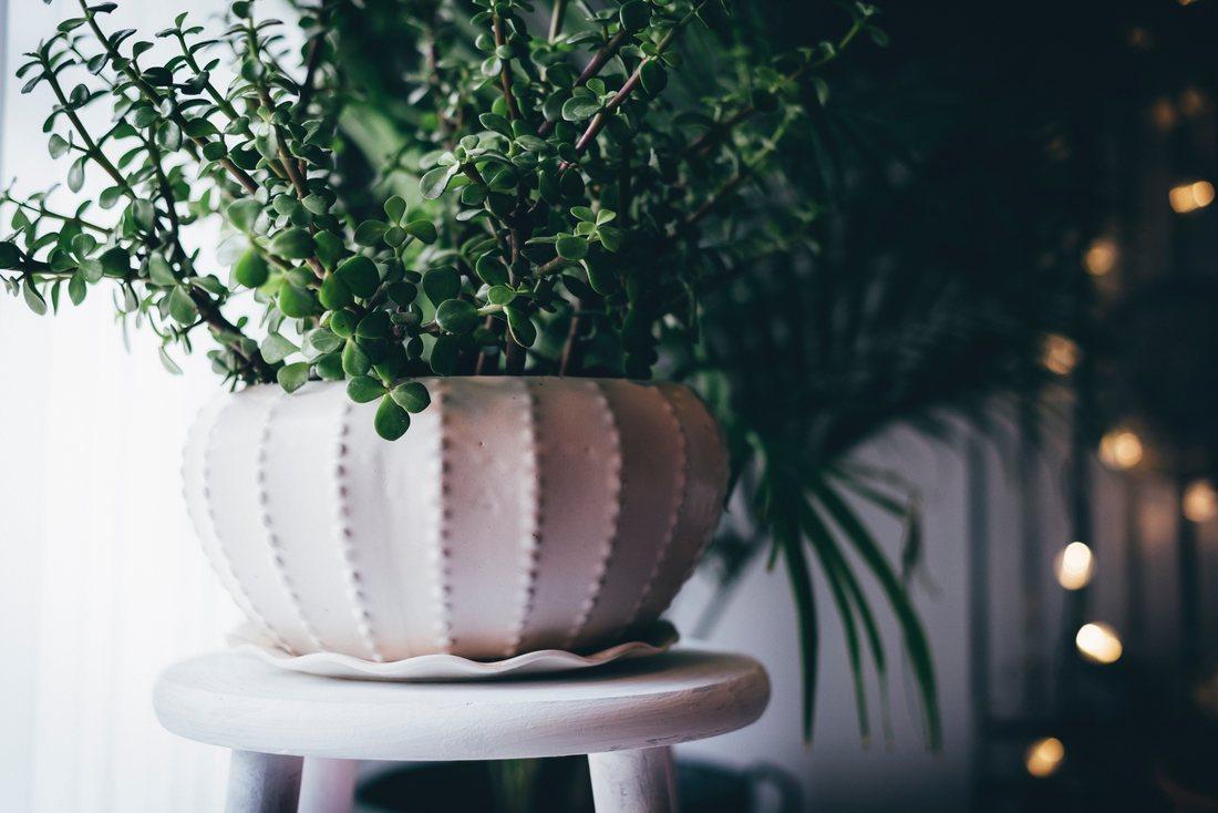 Cum sa-ti ingrijesti plantele de interior in sezonul rece?