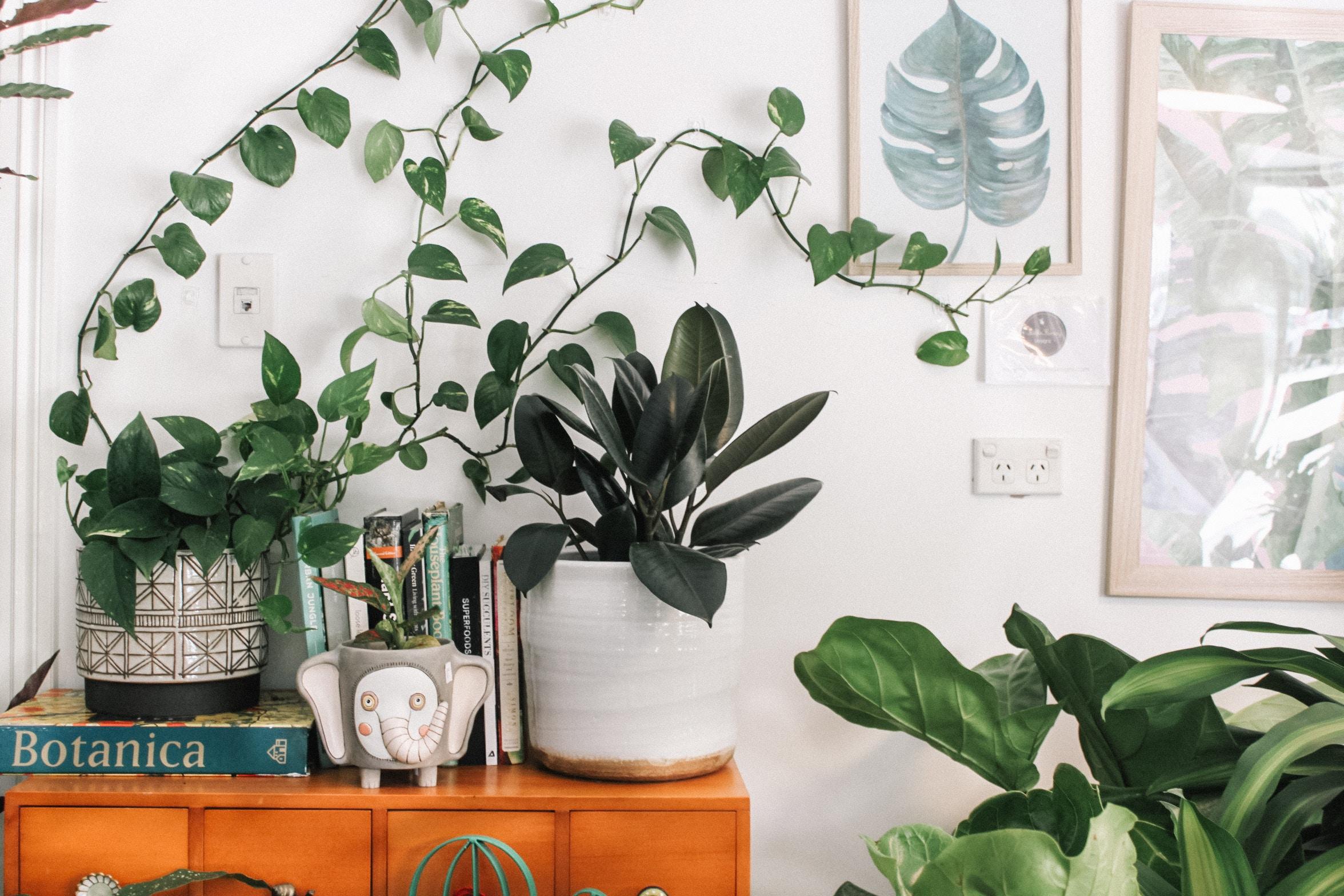 5 sfaturi pentru ingrijirea plantelor de interior