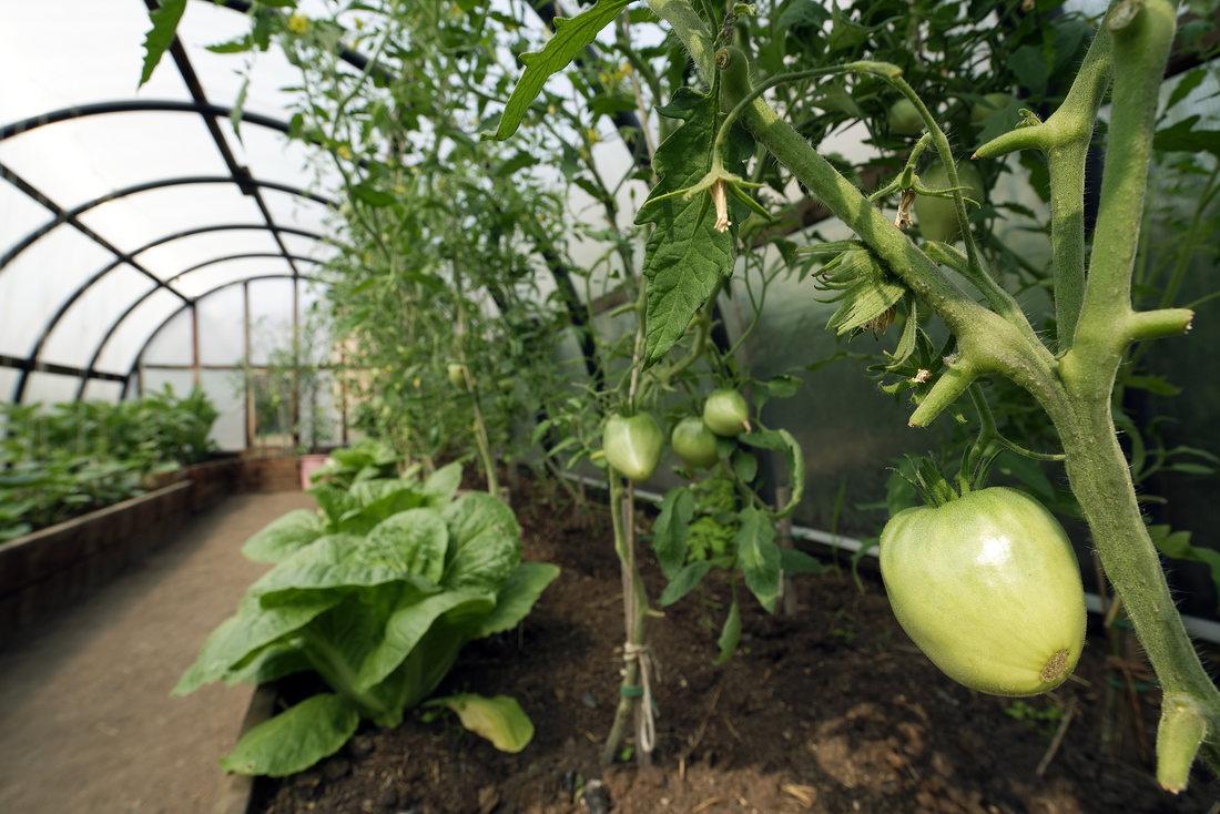 Ce trebuie sa stii despre rotatia culturilor in sere si solarii